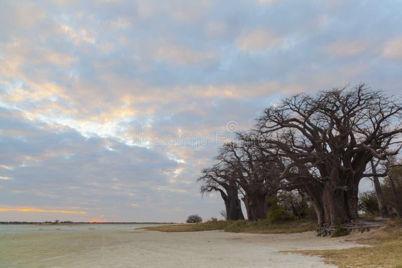 Coucher du soleil au baobab de Baines images stock