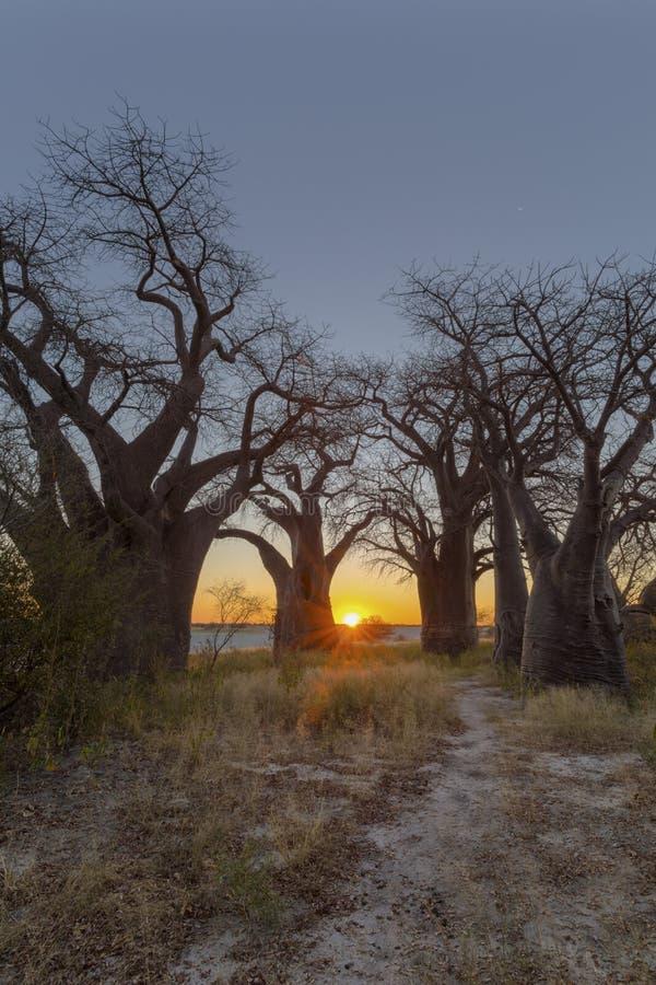 Coucher du soleil au baobab de Baines images libres de droits