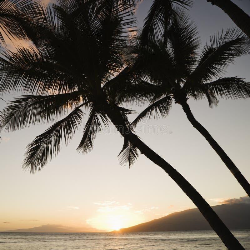 Coucher du soleil au-dessus d'océan avec des paumes. images stock