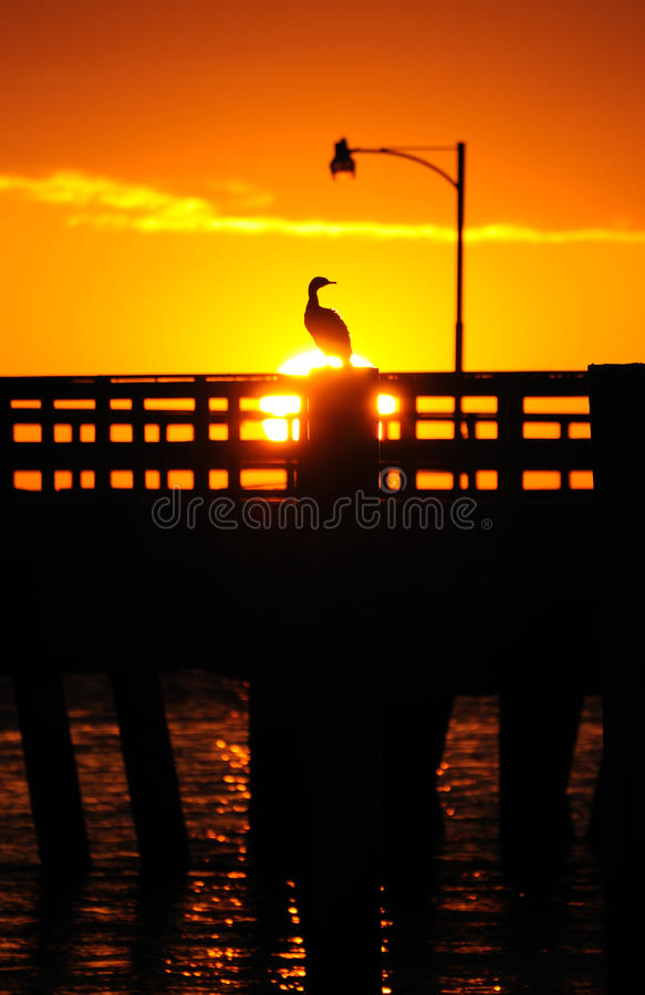 Coucher du soleil au-dessus d'oiseau sur le pilier photos stock