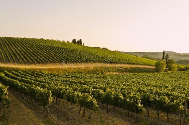 Coucher du soleil au-dessus de campagne toscane - Italie image libre de droits