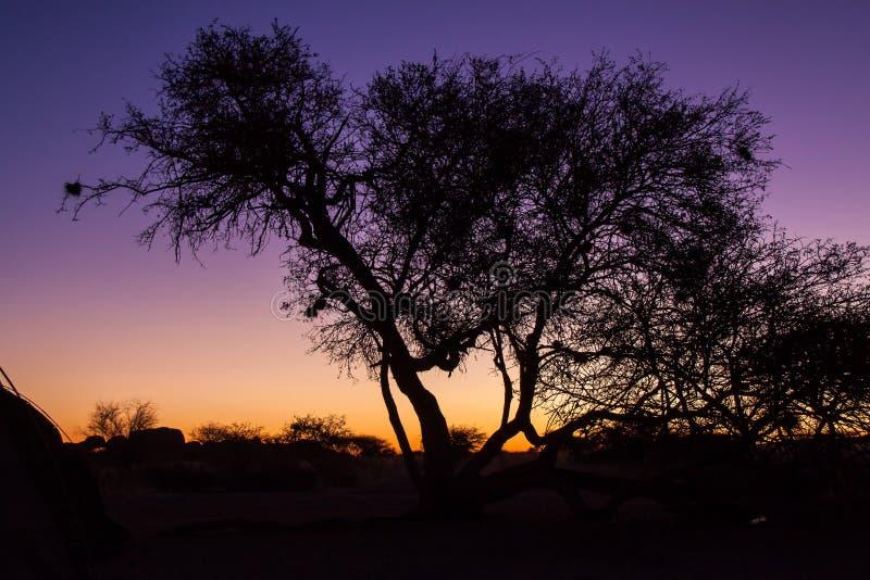 Coucher du soleil au-dessus de désert de Namib avec l'arbre, Namibie image stock