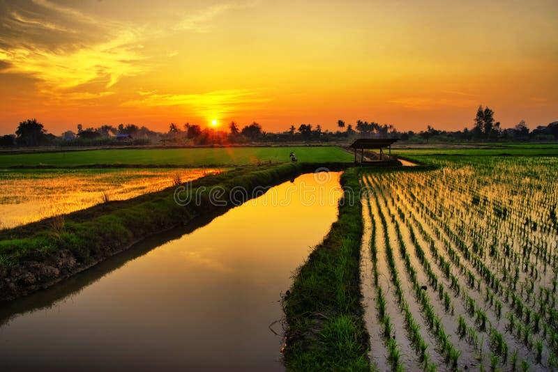 Coucher du soleil au-dessus de ferme de riz photos stock