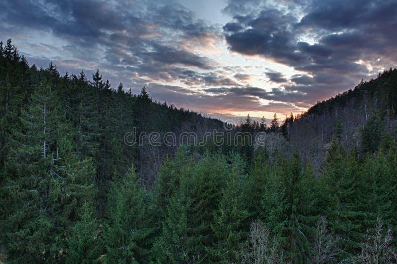 Coucher du soleil au-dessus de la forêt photo libre de droits