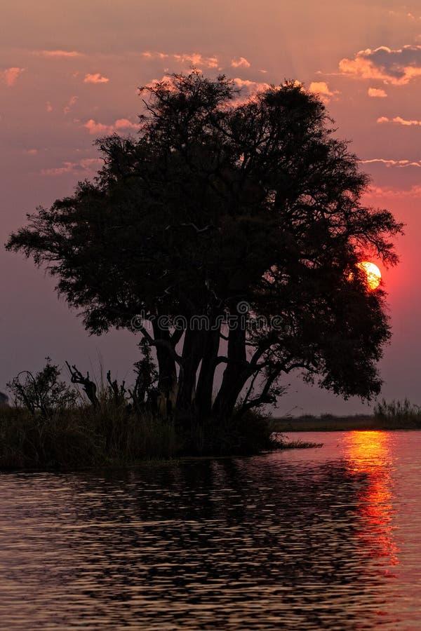 Coucher du soleil au-dessus de la rivière de Chobe images stock