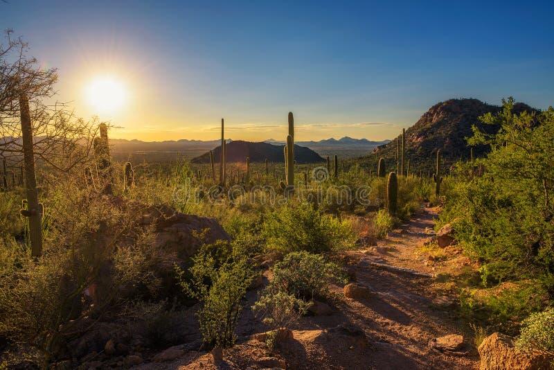 Coucher du soleil au-dessus de sentier de randonnée en parc national de Saguaro en Arizona images stock