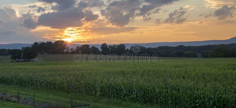 Coucher du soleil au-dessus de zone de maïs photos stock