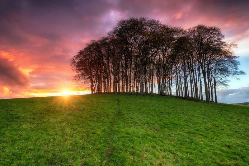 Coucher du soleil au-dessus des arbres photos stock