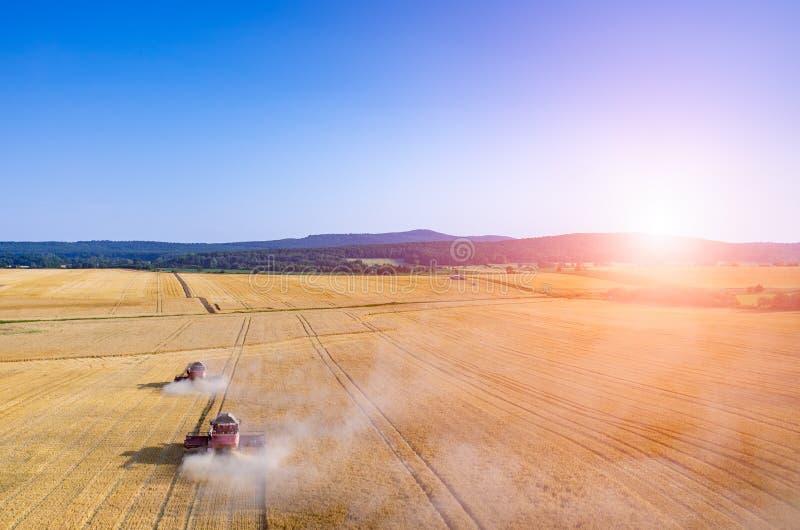 Coucher du soleil au-dessus des cartels travaillant au champ de blé images libres de droits