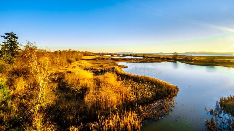 Coucher du soleil au-dessus des marécages de la réserve d'oiseaux de Reifel près de Ladner, AVANT JÉSUS CHRIST, le Canada images libres de droits