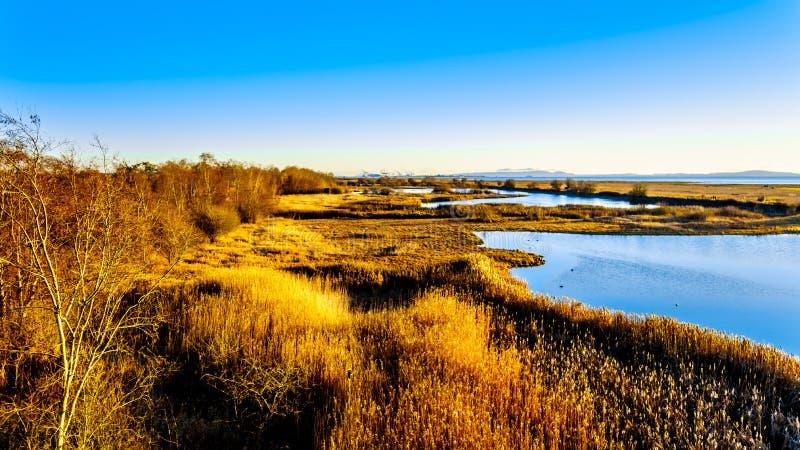 Coucher du soleil au-dessus des marécages de la réserve d'oiseaux de Reifel près de Ladner, AVANT JÉSUS CHRIST, le Canada image libre de droits