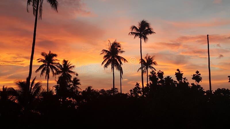 Coucher du soleil au-dessus des paumes photographie stock libre de droits
