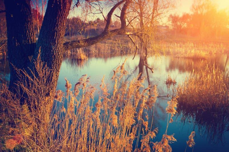 Coucher du soleil au-dessus du fleuve images libres de droits