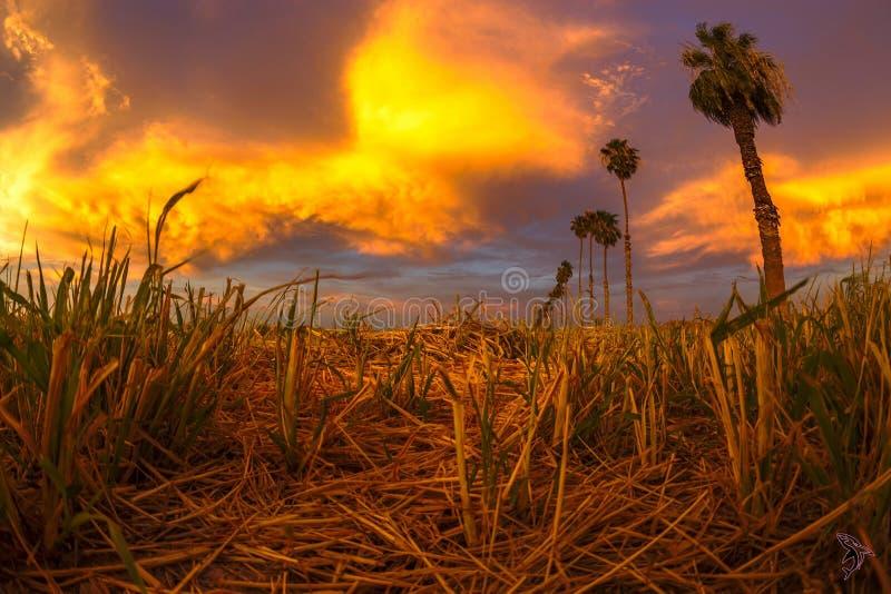 Coucher du soleil au-dessus du foin de coupe photographie stock libre de droits