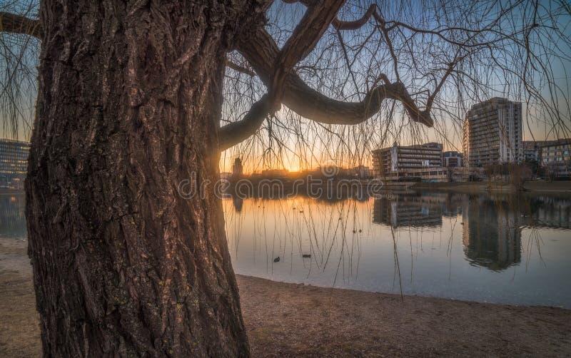 Coucher du soleil au-dessus du lac avec un arbre photos stock