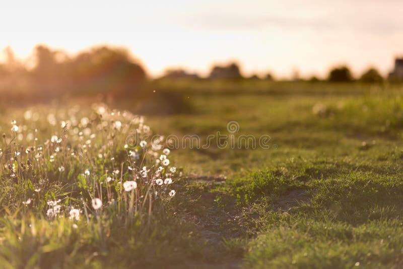 Coucher du soleil au-dessus du pré photographie stock libre de droits