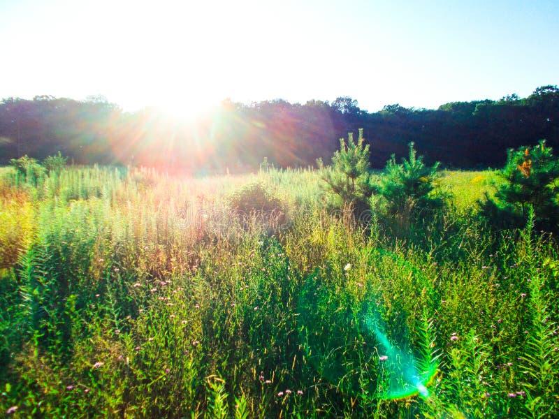 Coucher du soleil au-dessus du pré image stock