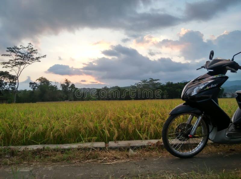 Coucher du soleil au milieu des gisements de riz photographie stock libre de droits