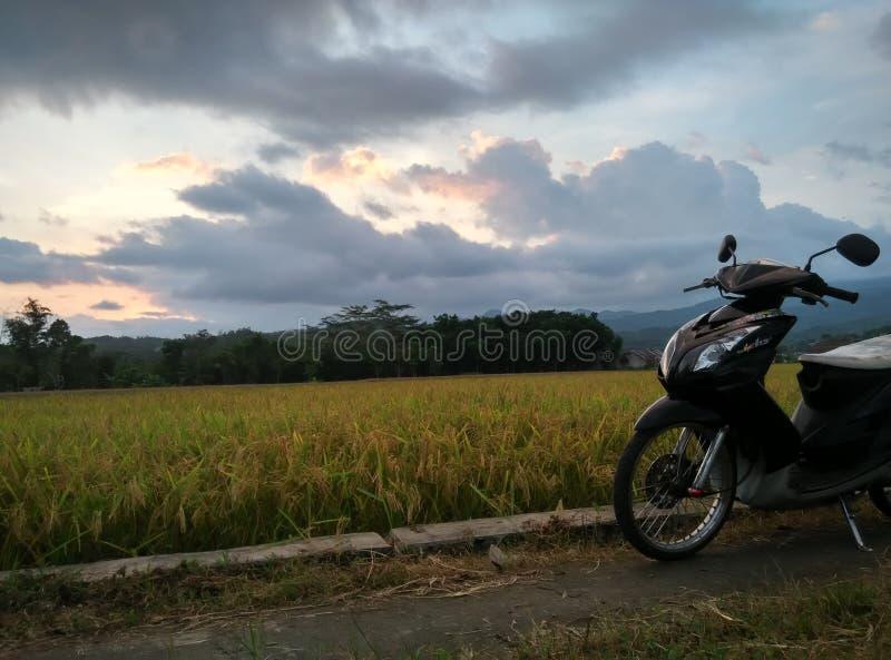 Coucher du soleil au milieu des gisements de riz image stock