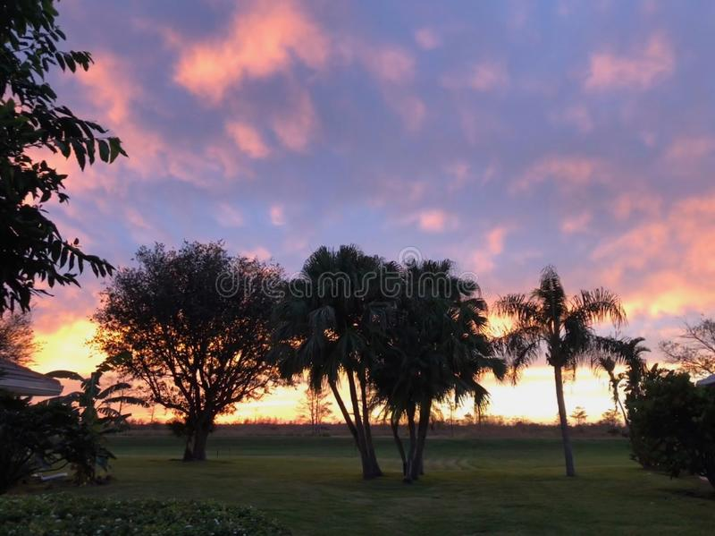 coucher du soleil au néon dans le domaine et deux arbres images stock