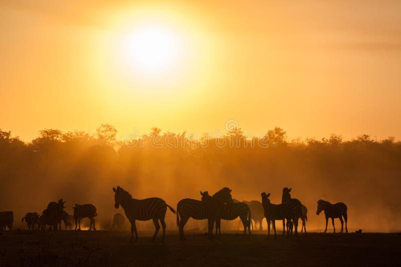 Coucher du soleil au parc national de kruger avec le silo de zèbres, Afrique du Sud photographie stock libre de droits
