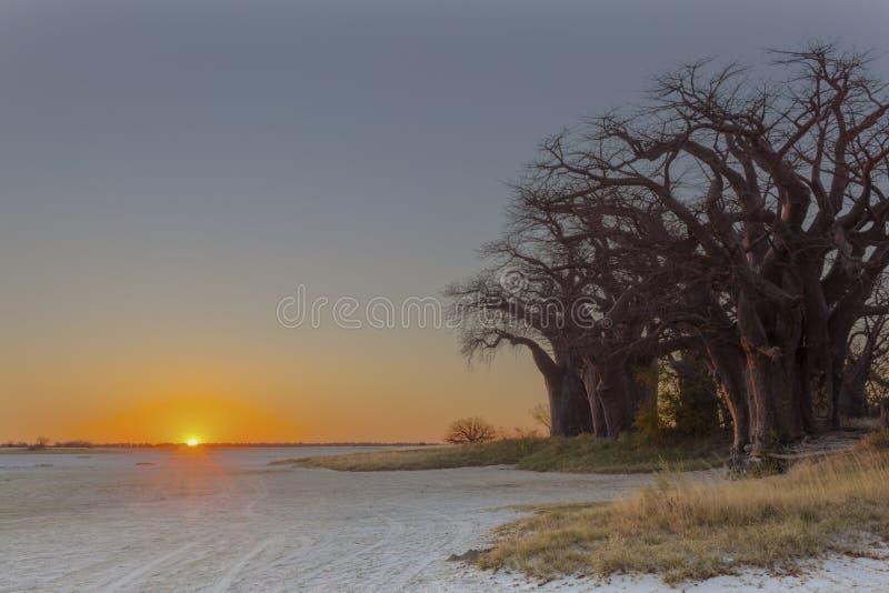 Coucher du soleil au ` s de baobab de Baines images libres de droits