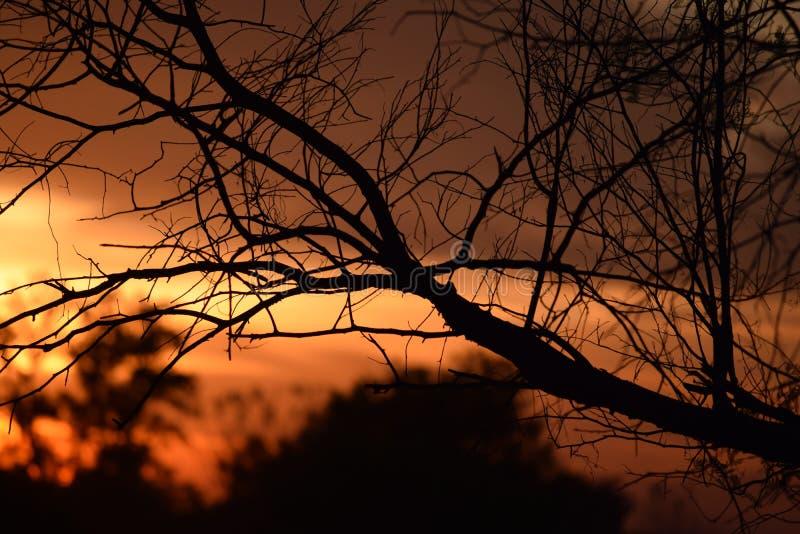 Coucher du soleil avec des branches photographie stock libre de droits