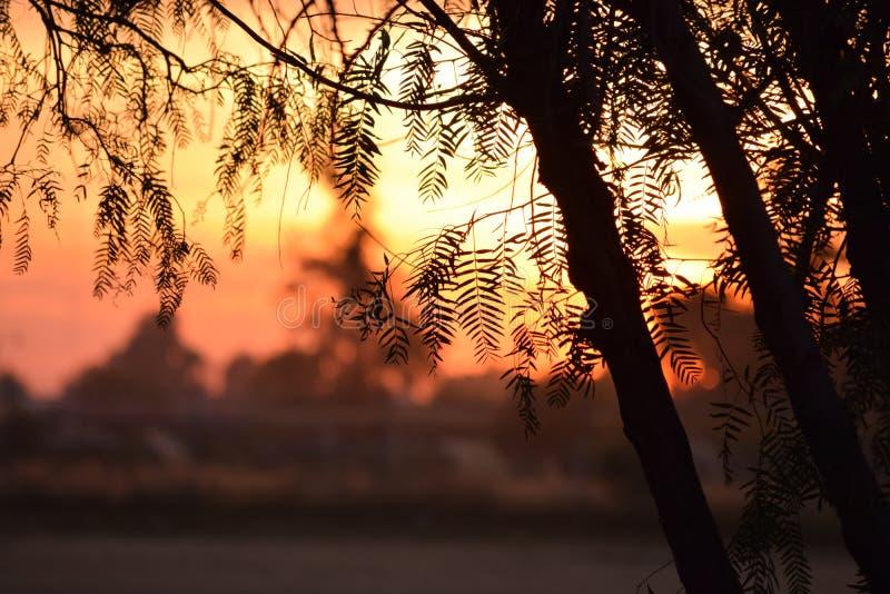 Coucher du soleil avec des branches image stock
