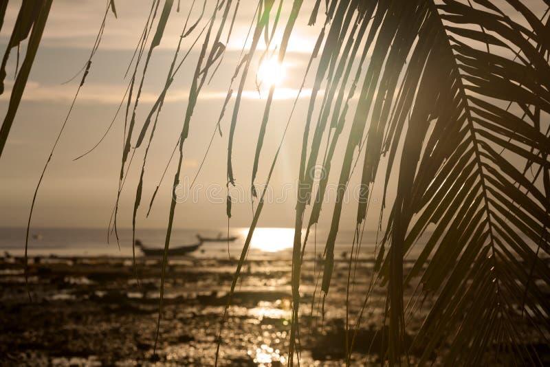 Coucher du soleil avec des lames de bateau et de palmier images stock