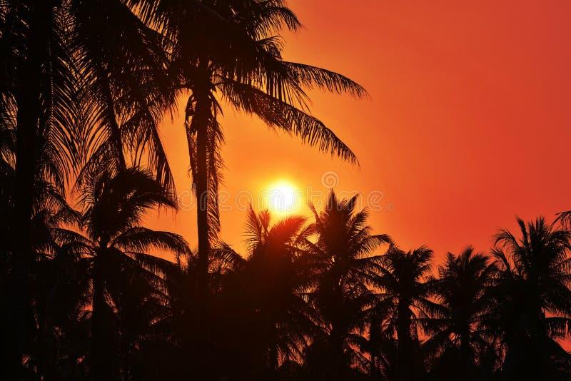 Coucher du soleil avec l'arbre de noix de coco silhouettes photo stock