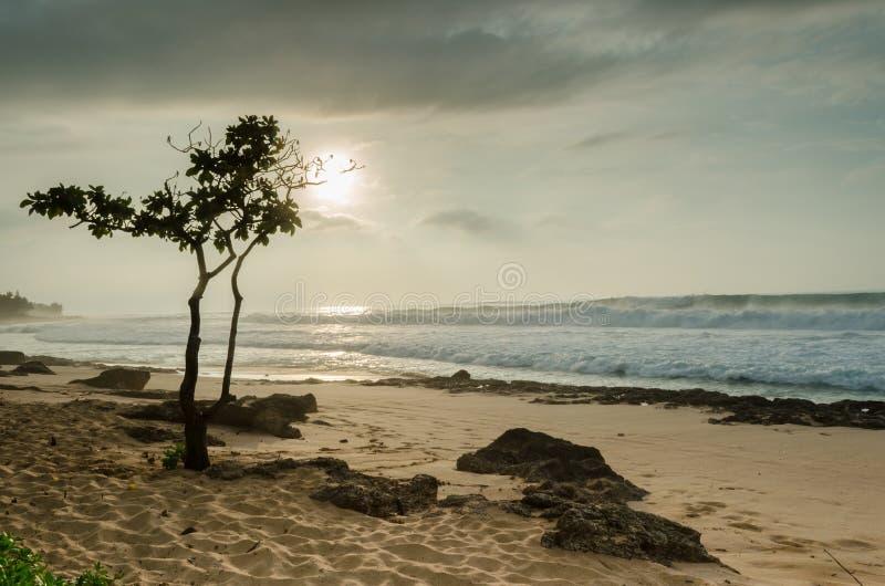 Coucher du soleil avec l'arbre de parapluie sur la plage Oahu, Hawaï de coucher du soleil photos libres de droits