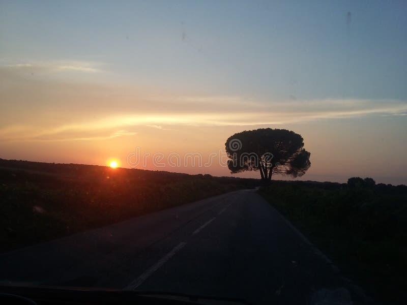 Coucher du soleil avec l'arbre noir photo libre de droits