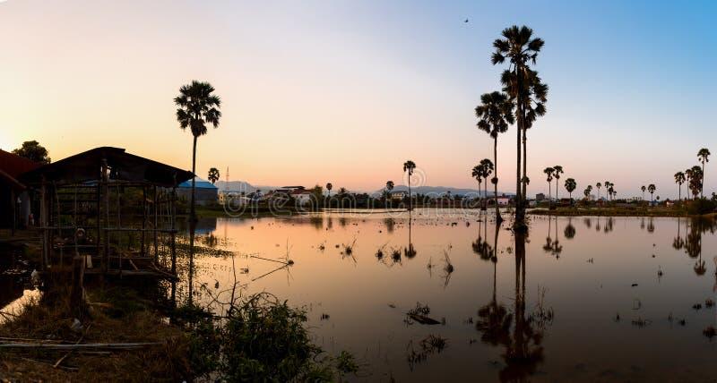 Coucher du soleil avec le petit étang et les palmiers s'élevant dedans images libres de droits