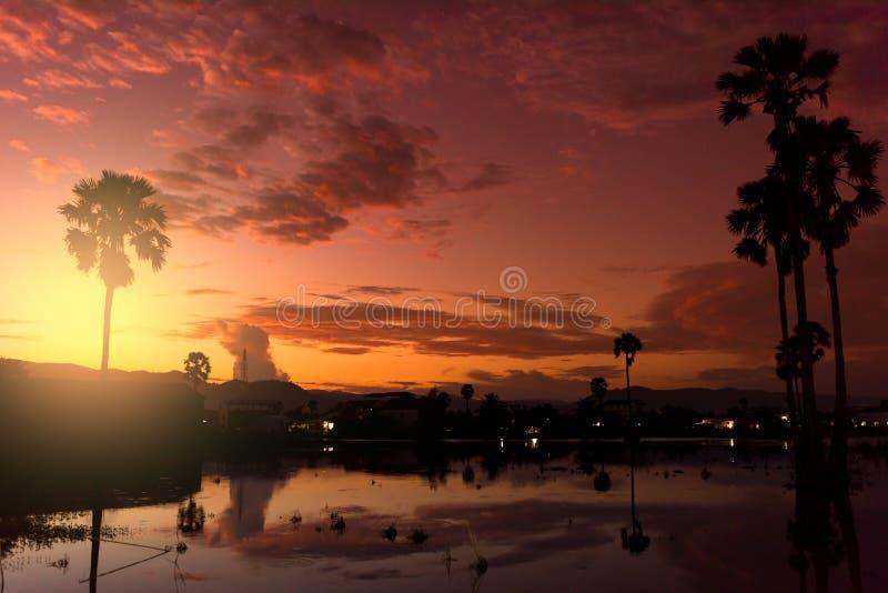 Coucher du soleil avec le petits étang et palmiers photos stock