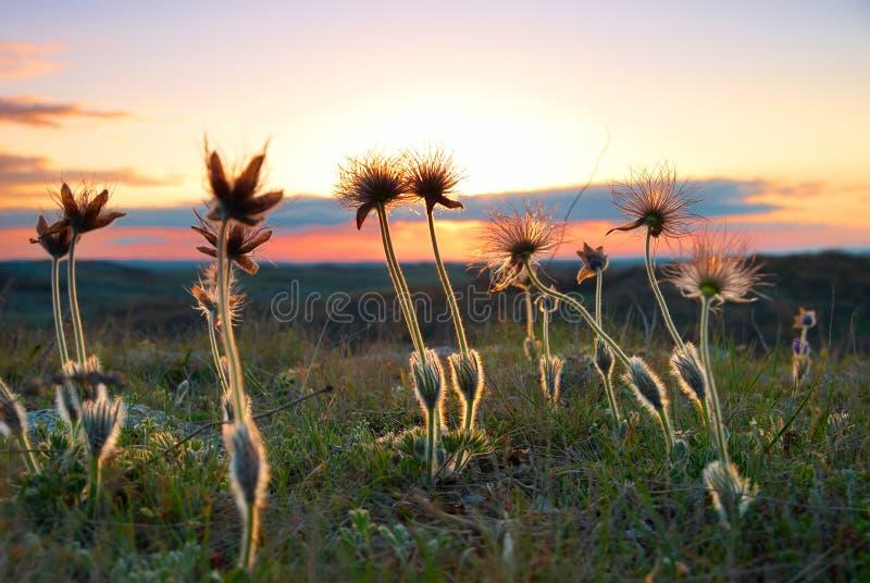 Coucher du soleil avec les fleurs deflorated photos libres de droits