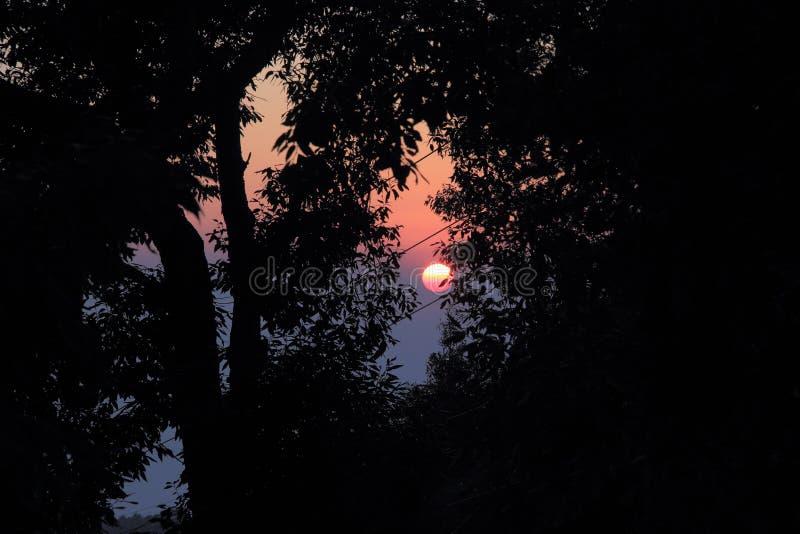 Coucher du soleil avec une feuille d'arbre le Sun images libres de droits