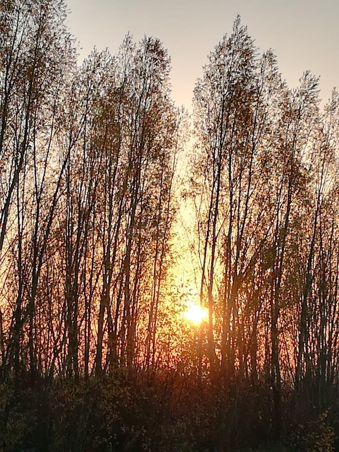 Coucher du soleil chaud avant l'hiver images libres de droits