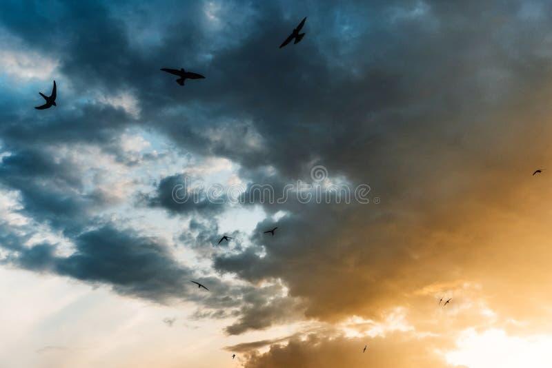 Coucher du soleil coloré lumineux, tons bleus et rouges jaunes avec des oiseaux images libres de droits