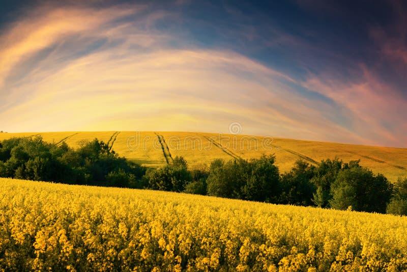 Coucher du soleil coloré sur le champ jaune photographie stock