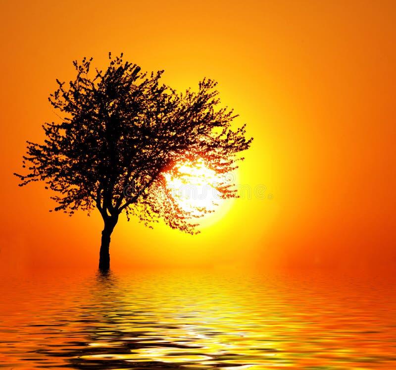 Coucher du soleil comme fruit image stock