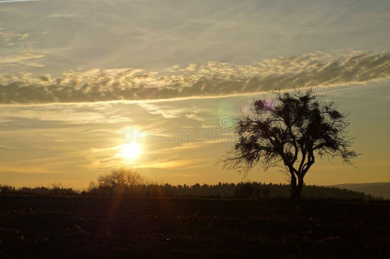 Coucher du soleil contre un arbre solitaire beau photographie stock