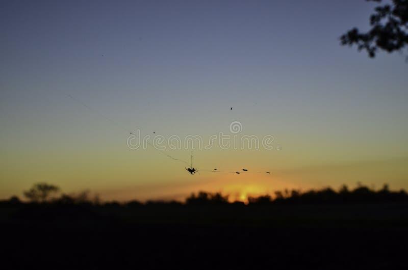 Coucher du soleil d'araignée image stock