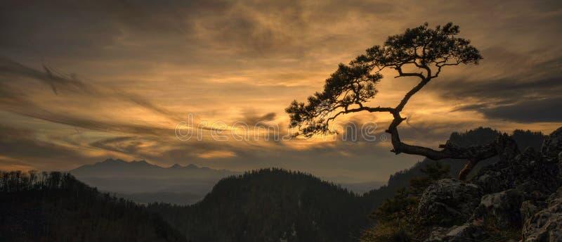 Coucher du soleil d'arbre de Sokolica photos libres de droits