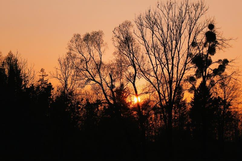Coucher du soleil d'arbres de Silouette photos stock