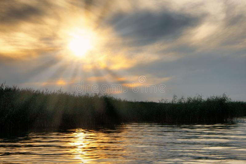 Coucher du soleil d'or au-dessus du Lac Balaton avec les roseaux et le rayon de soleil photos libres de droits