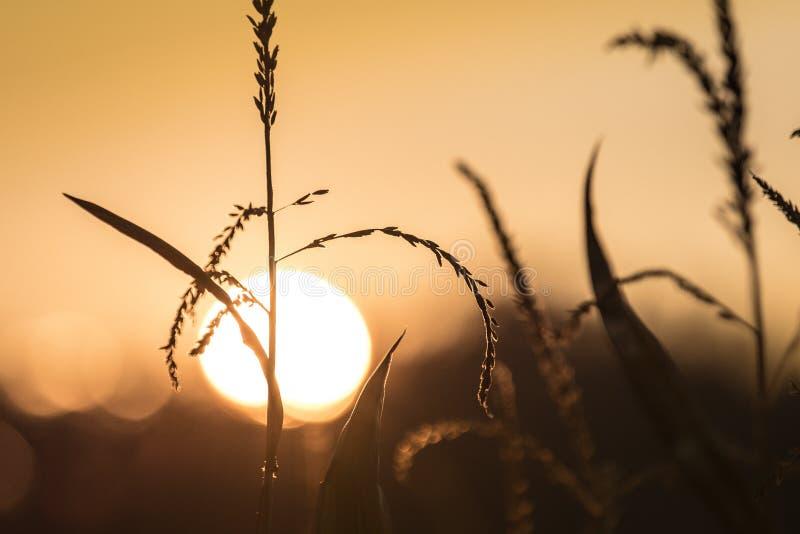 Coucher du soleil d'automne images stock