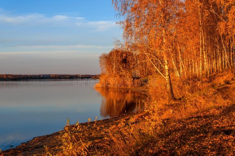 Coucher du soleil d'automne de lac de verger de bouleau photo stock