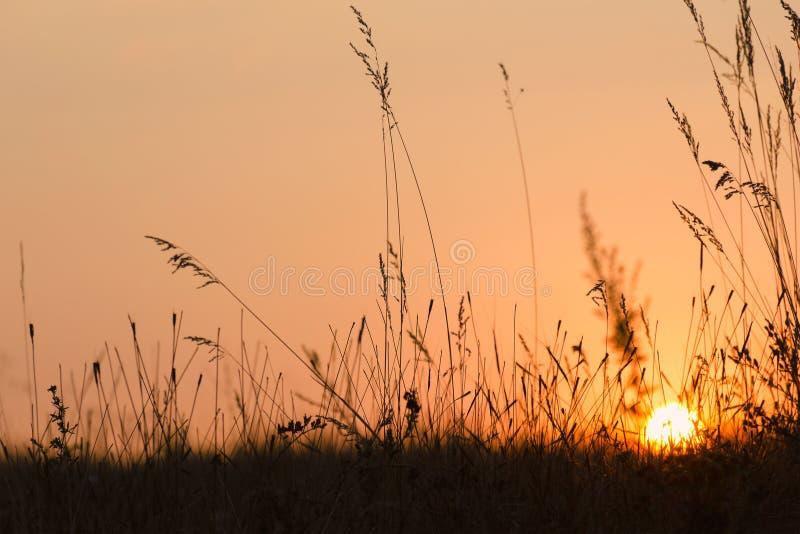 Coucher du soleil d'automne ou d'été - le soleil par la silhouette de l'herbe image libre de droits