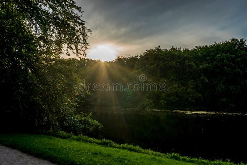 Coucher du soleil d'or dans le Bos de Haagse, forêt à la Haye image stock