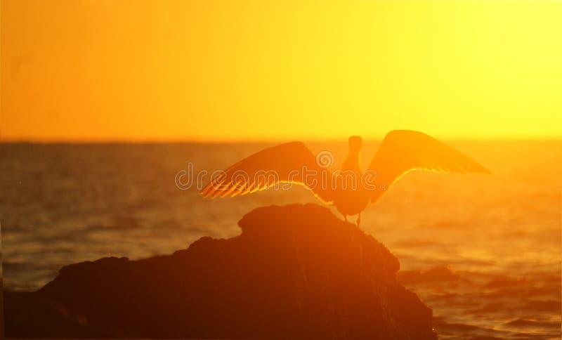 Coucher du soleil d'or de mer photo stock